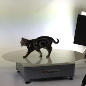 animation of a cat on a 360° rotating platform